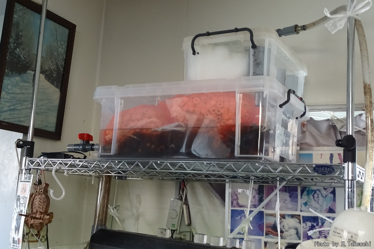 熱帯魚水槽濾過槽の容量アップ改良(作り替え)(2015年4月25日)